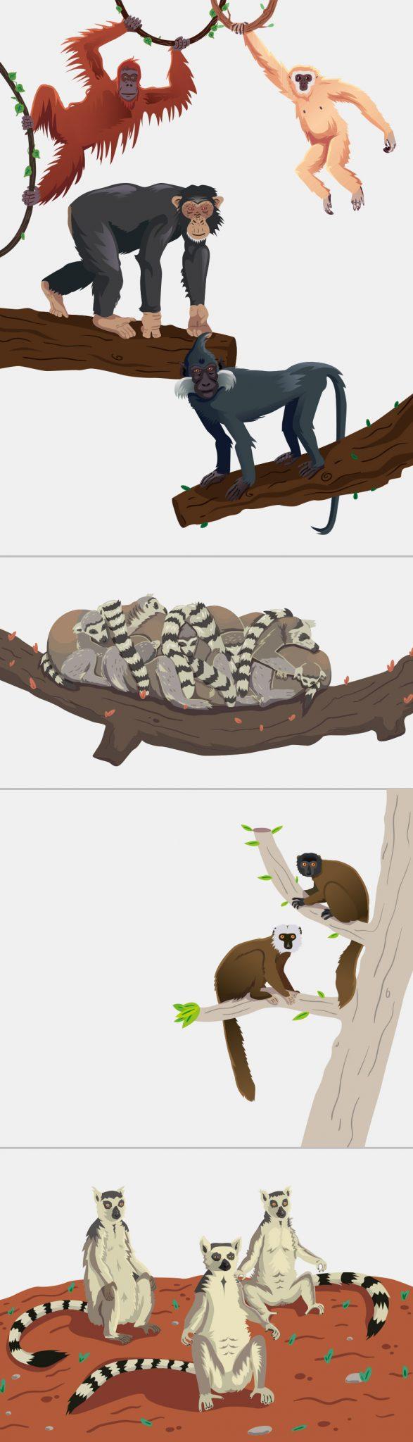 Ilustraciones animales vectoriales para riosafari